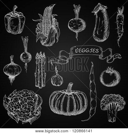 Vegetables engraving chalk sketches set