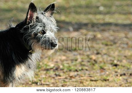 A dog on a walk in the park in early spring.