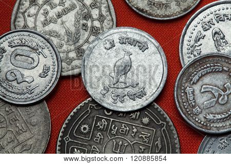 Coins of Nepal. Himalayan monal (Lophophorus impejanus) depicted in the Nepalese 10 paisa coin.
