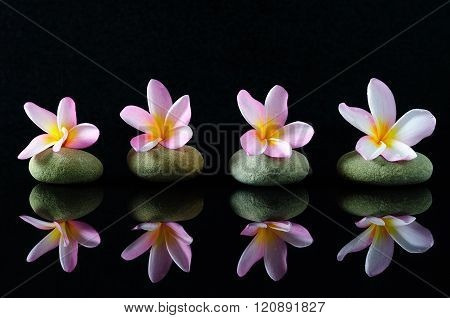 Spa, Beauty And Wellness Concept - Frangipani Flowers On A Zen Stones With Reflection, Dark Backgrou