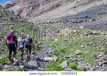 Group of Hikers Walking on Trail Backs
