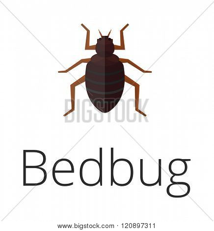 Bedbug parasite vector illustration. Bedbug parasite isolated on white background. Bedbug parasite vector icon illustration. Bedbug parasite isolated vector. Bedbug parasite silhouette