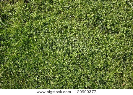 The Texture Of The Green Plants