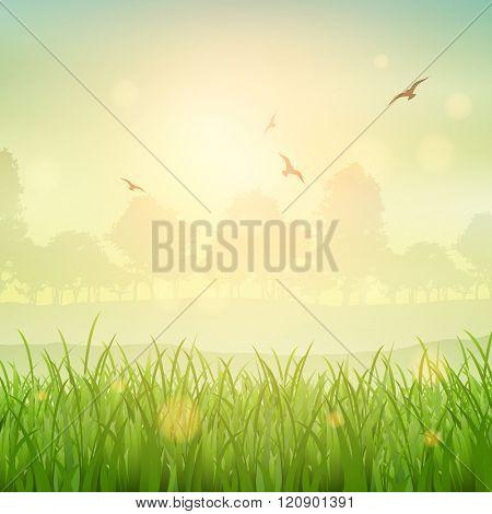 Nature background of a grassy landscape