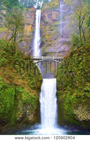 March 1, 2016 in the Columbia River Gorge, OR:  Pedestrian bridge where hikers can walk across a pedestrian bridge taken at Multnomah Falls surrounded by a lush green forest in the Columbia River Gorge, OR