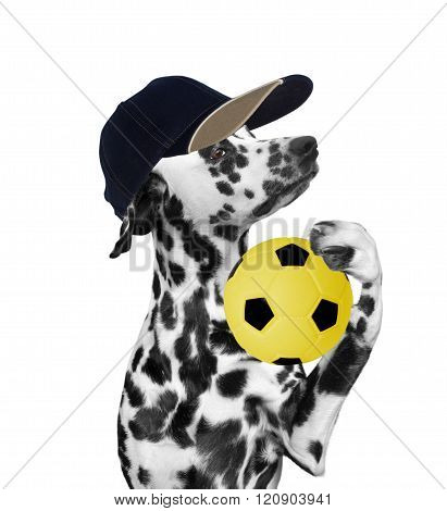 Dog In Cap Holding A Soccer Ball