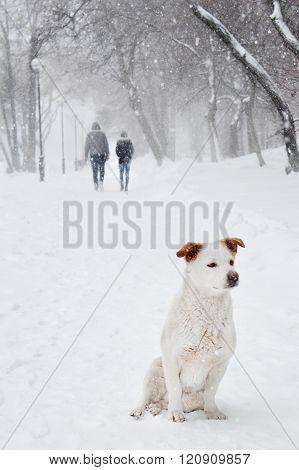 White Dog Under Snow