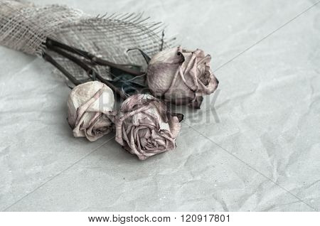 dried rose flowers on an old, wrinkled, gray paperWithered Rose