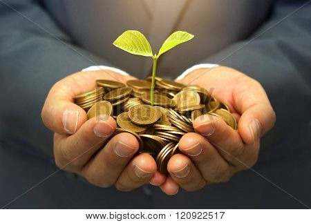 Hands of businessman holding a young green plant growing on a pile of golden coins / Business with csr and ethics