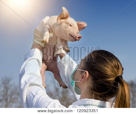 Veterinarian Girl Raising Piglet In The Air