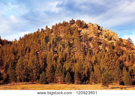 Forest Covered Mountain