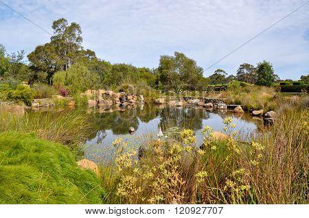 Botanical Garden Pond