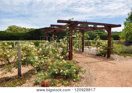 Arbor Entrance to Hedge Maze