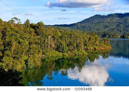 A River Flowing Through A Rainforest