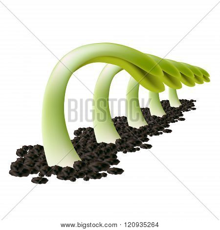 five green sprouts