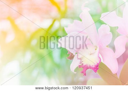 Beautiful Orchid Flower Bloom With Soft Focus And Blur Background