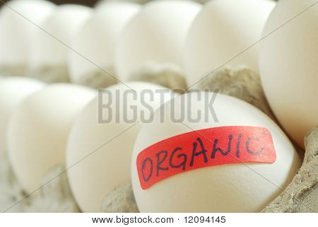 Extreme close-up image of organic eggs in cardboard box