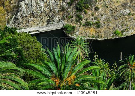Tropical Canarian Green Palm and lake