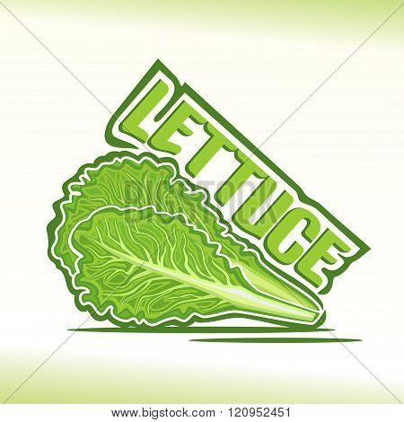 Vector illustration on the theme of lettuce