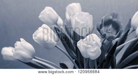White Tulips And One Dark Flower Of Monochrome Silvery Tone