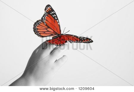 rote Monarch-Schmetterling