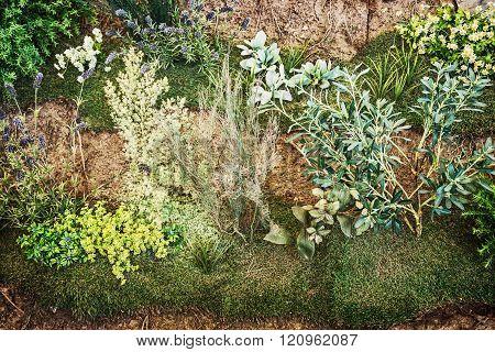 Gardening theme, natural scene, greenery