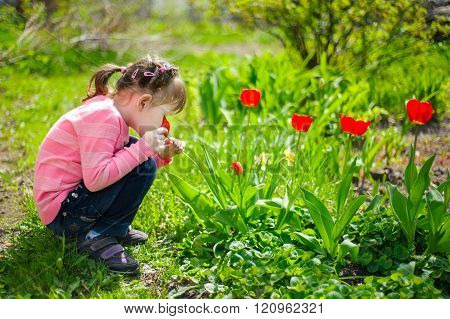 Beautiful Girl Sitting On His Haunches And Sniffing Tulips On The Flowerbed