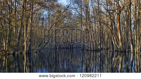 Sides of the Lumber River in North Carolina lined with trees