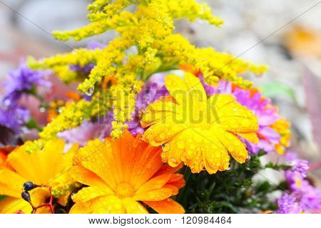 sneezeweed asters, coneflower and goldenrod as autumn bouquet