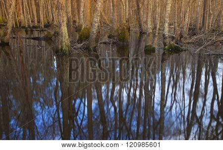 Trees reflecting in the water of the Lumber River in North Carolina