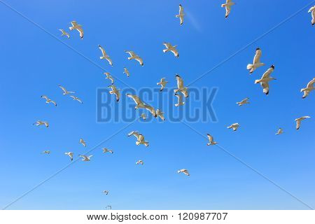 swarm of sea gulls flying close to the beach