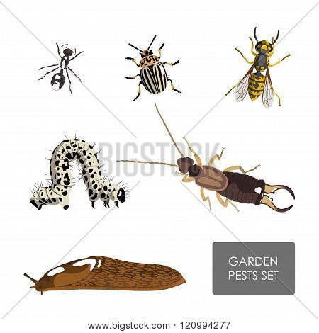 Set Of Garden Pests On A White Background . Detailed Drawing Insects
