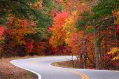 foto of fall trees  - bright fall leaves on a s - JPG