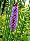 Purple Flower In Spring/ Summer poster