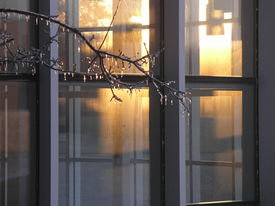 pic of winter trees  - warm golden light shines from inside a building in contrast to the ice coated branches outside