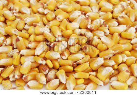 Kernels Of Corn 4