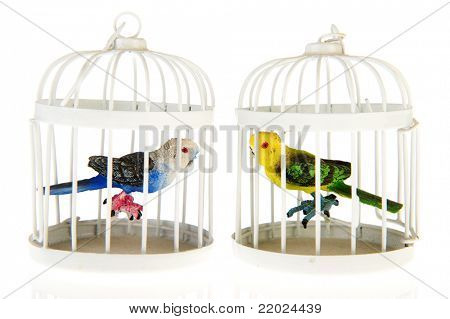 colorful miniature parrots in cages on white background