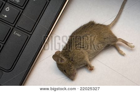 Non-working Mouse