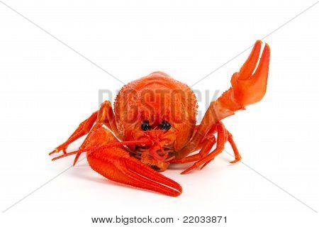 Hot Boiled Crayfish Say Hello