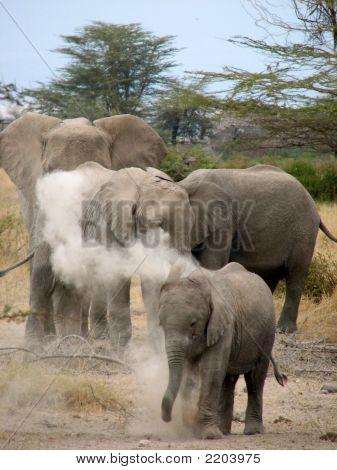 Africa 092