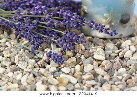 Spa Background With Lavender /lavandula Angustifolia Aromatico/