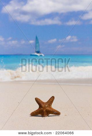 Vacation Shore Detail
