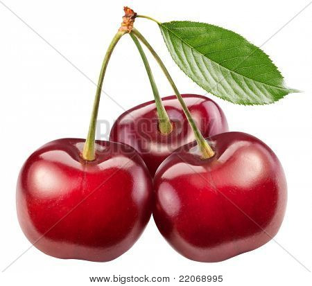 Three perfect sweet cherries with the leaf isolated on a white background.