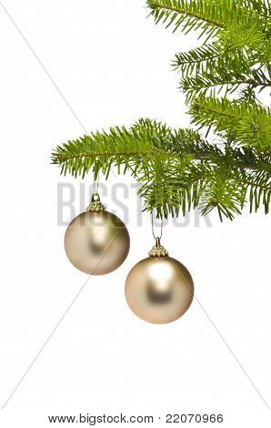 Two Golden Decoration Balls In Christmas Tree Branch