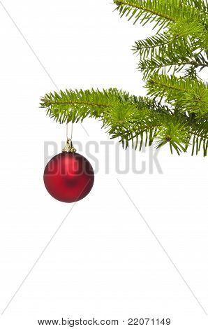 One Red Decoration Ball In Christmas Tree Branch