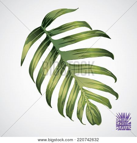 Tropical Leaf Vector Green Palm Silhouette Of Exotic Plant Botanical Element Isolated