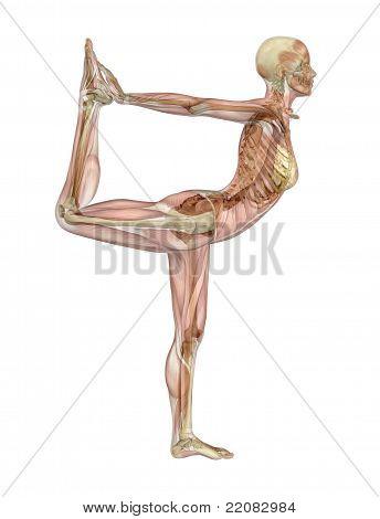 Yoga Dancer Pose - Muscle Over Skeleton