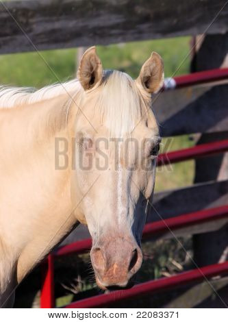 One-eye Horse