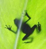 pic of dart frog  - A macro shot of a Poison Dart Frog back - JPG