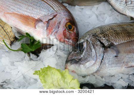 Fresh Fish On Fishmarket